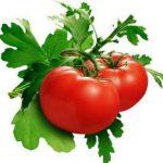 Pomidornaja dieta dlja pohudenija